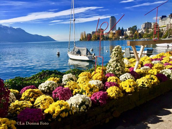 Mums - - Beautiful International Landscape Photography - La Donna Foto - LaDonnaFoto.com