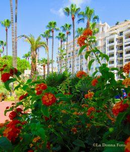 Lantana at Cannes, France - - Beautiful International Landscape Photography - La Donna Foto - LaDonnaFoto.com