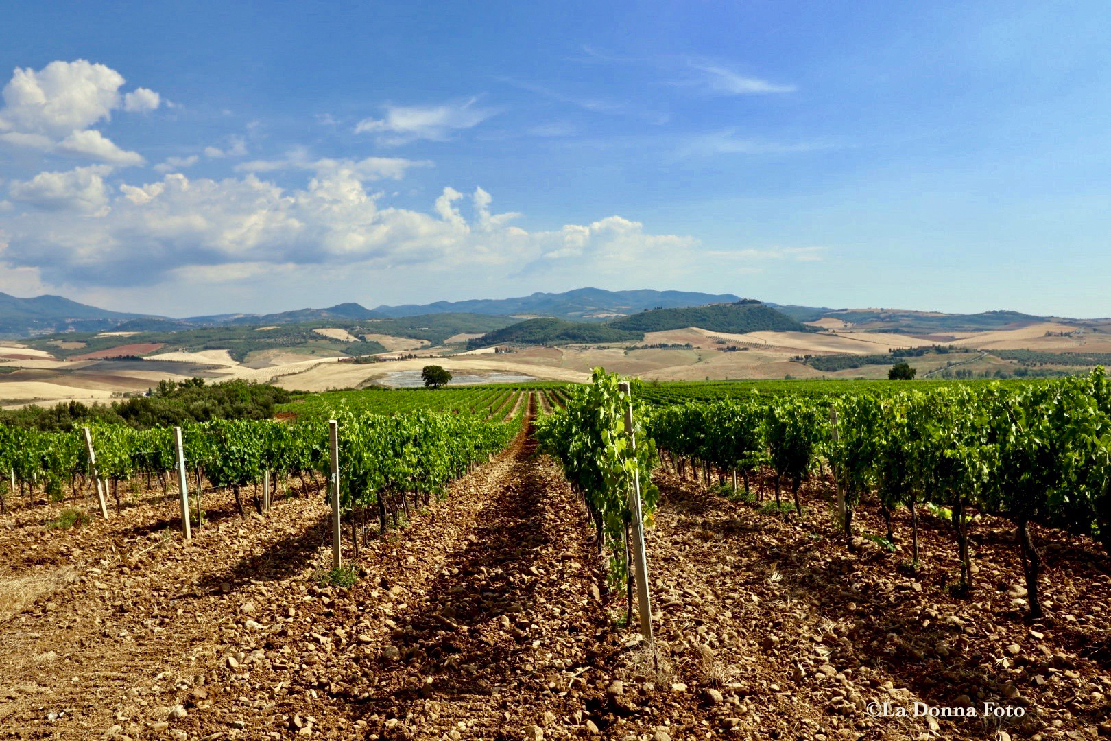 Summer Tuscan Vineyard - Beautiful International Landscape Photography - La Donna Foto - LaDonnaFoto.com