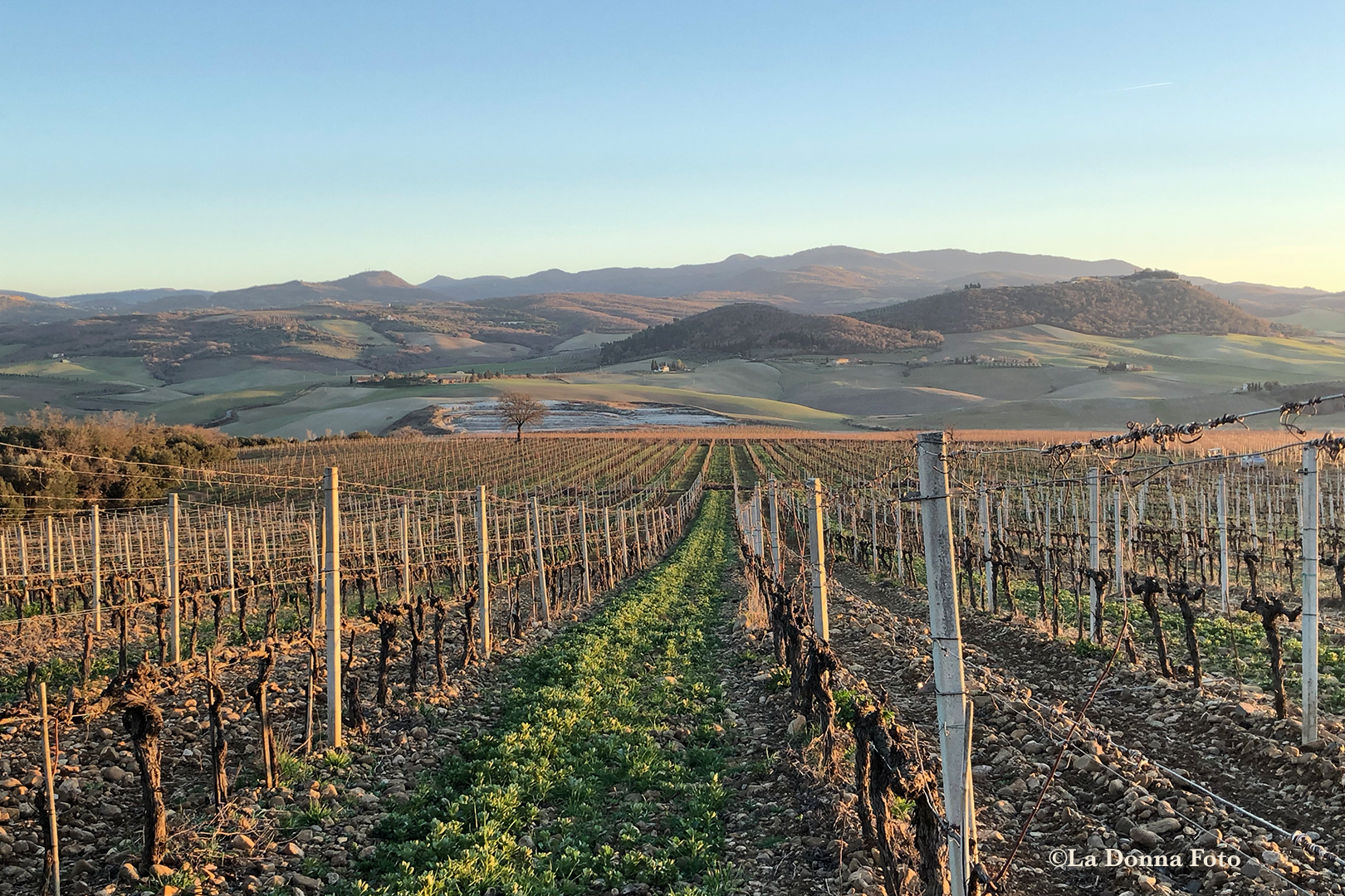 Winter Tuscan Vineyard-- Beautiful International Landscape Photography - La Donna Foto - LaDonnaFoto.com