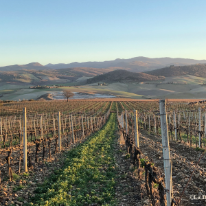 Winter Tuscan Vineyard-- Beautiful International Landscape Photography - La Donna Foto - LaDonnaFoto.com